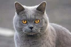 Posterunterlage Katze 400x600