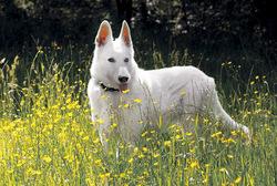 Posterunterlage Hund 400x600