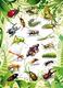 Schmucketikett MAGIC Insekten 2D Folie 1Bl 1Pack