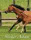 Stickeralben A5 hoch Pferd